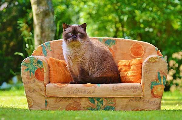 Je bank beschermen tegen katten