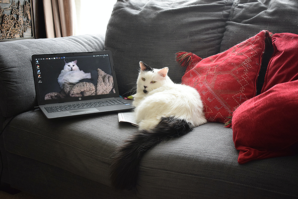 Couch potato?